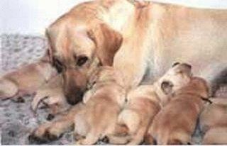 Особенности сбалансированного питания для собак 1756e360011